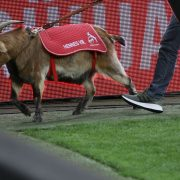 1. FC Köln präsentiert Hennes IX