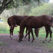 """""""Pferde werden oft zu Pädagogen"""" – Mit der passenden Ausrüstung für Pferd und Reiter wird das Reiterlebnis zum Vergnügen"""